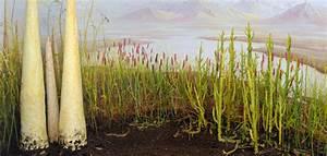 Silurian – Early Devonian terrestrial communities  Silurian
