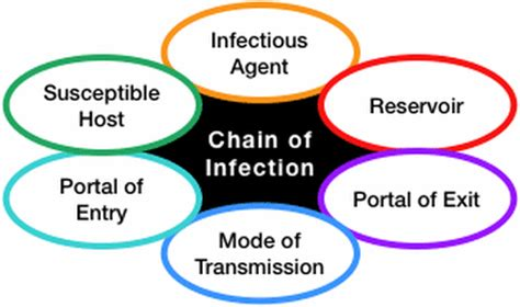 infection lyme disease