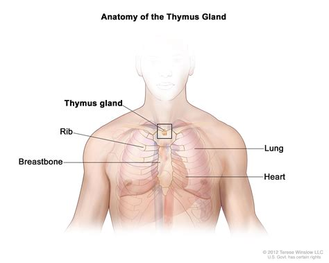 Thymic Cancer
