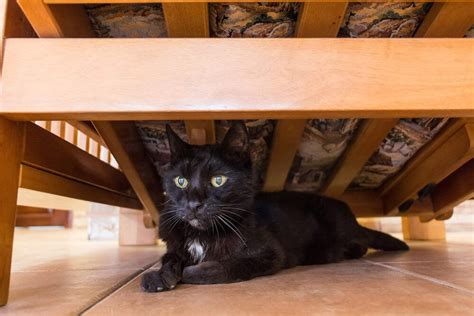 How to stop cat from hiding under the bed, MISHKANET.COM