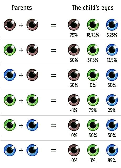 eye color calculator with grandparents eye color calculator baby eye color predictor apprecs