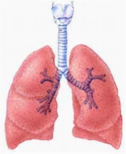 Southeast Houston Pulmonology: Pulmonary medical services, lung disease, Emphysema, sleep disorders  Pneumonia Asbestos