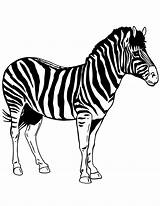 Zebra Printable Stencil Template Coloring Zebre Coloriage Dessin Stencils Clipart Templates Realistic Colouring Ausmalbilder Drawing Cartoon Animal Pdf Ausmalbild Imprimer sketch template
