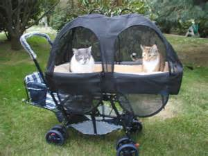 cat stroller 440 best images about for my fur babies on pet