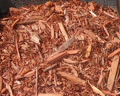 mulch that keeps bugs away 10 surprising natural methods of keeping mosquitoes away for good