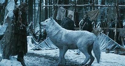 Ghost Wolf Thrones Snow Direwolf Jon Direwolves