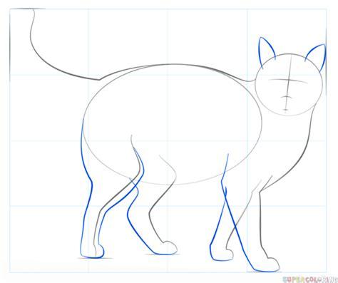 draw  realistic cat step  step drawing tutorials
