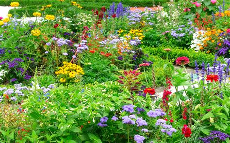how to design a herbaceous border how to create a herbaceous border on a budget