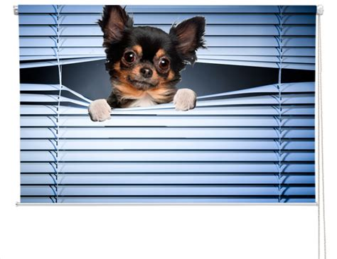 cool peeking dog window blind custom printed photo