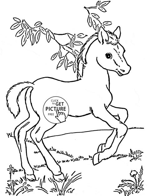 baby horse pony coloring page  kids  girls coloring