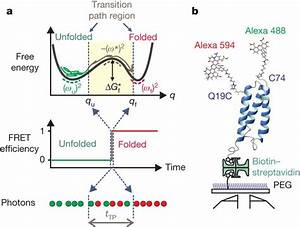 Free Energy Diagram For Protein Folding  Renaturation  And