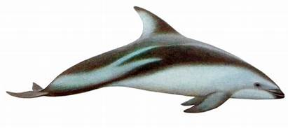 Dolphin Dusky Dolphins Comment Logged Must Cancel