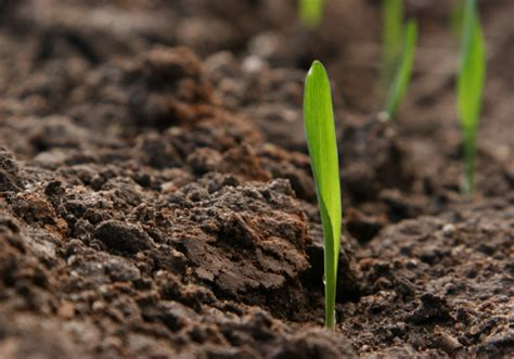 Terreno Acido Per Quali Piante by Come Verificare Il Ph Terreno Idee Green