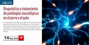 Diagn U00f3stico Y Tratamiento De Patolog U00edas Neurol U00f3gicas En El