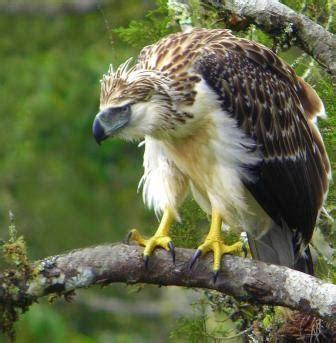 haring ibon birdlife