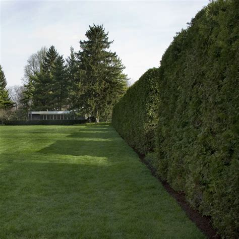 miller garden eero saarinen s miller house buildipedia