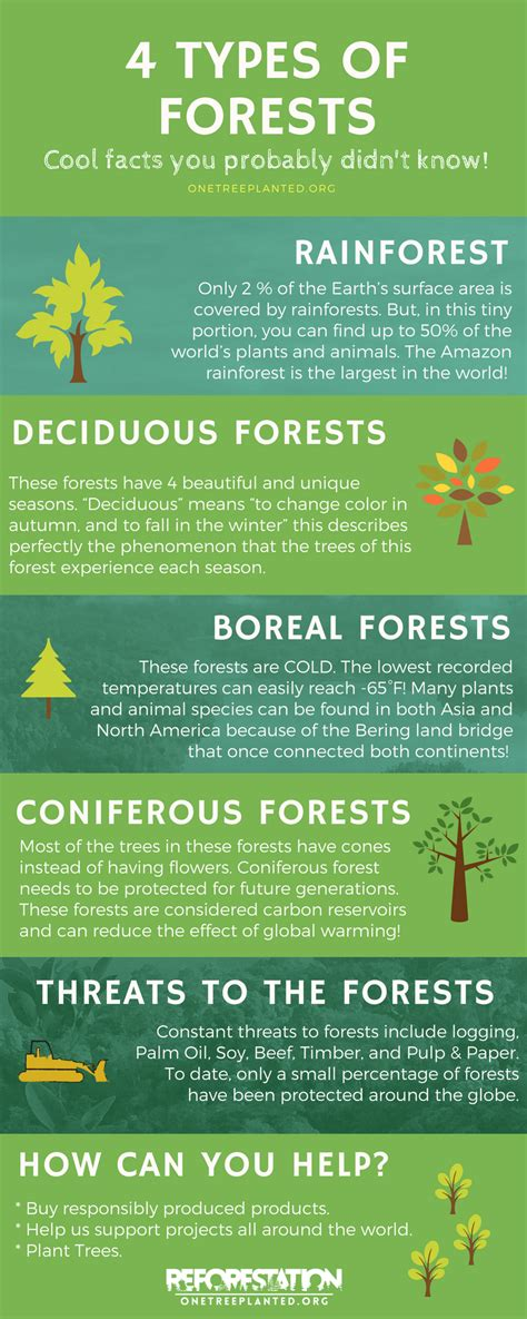 4 Types of Forests Around the World {Infographic} One
