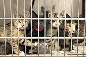 help local animal shelters think outside box