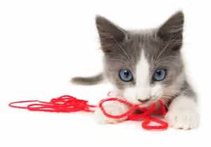 cat play dogncats s information caring for or cats