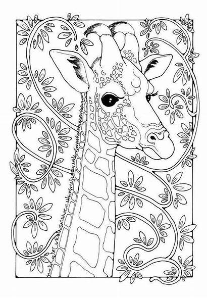 Giraffe Coloring Pages Colour Colouring Mandala Patterns