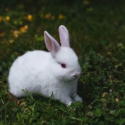 Rabbit Easter Stocksy
