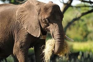 Wildlife Wednesdays: Elephants Eat Their Fruits and ...