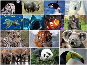 Animal En G : semana de la diversidad ~ Melissatoandfro.com Idées de Décoration