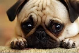 Sad Puppies  7   Sad Puppy
