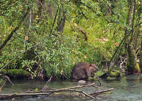 land fresh water wildlife
