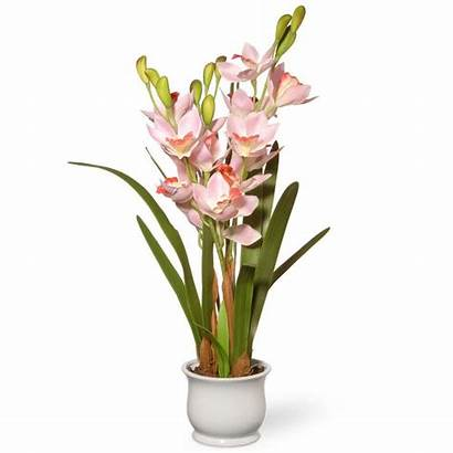 Orchid Flowers Tree Orchids Company Potted National