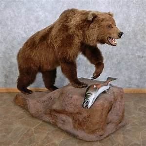 Grizzly Bear w/ Coho Salmon Mount For Sale #15639 - The