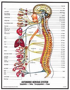 Schluter Chiropractic What Is Chiropractic