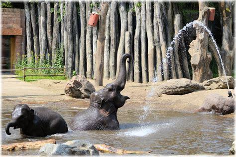 elephant tub india in the bath tub with the elephants 17 free stock photo