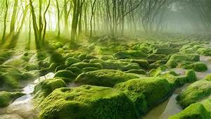 Wallpaper, Sunlight, Trees, Landscape, Forest, Water, Nature, Grass, Stones, Moss, Morning