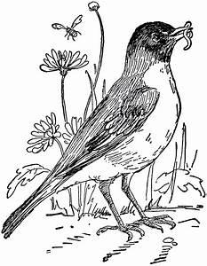 Robin Bird Black And White Clipart