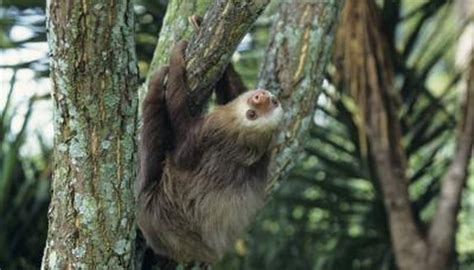 kinds  sloths animals momme