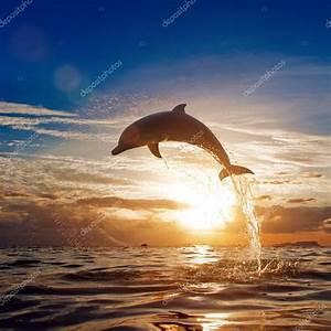 Schöne Delfin Bilder : sch ne delphin springen aus leuchtenden wasser stockfoto 13898220 ~ Frokenaadalensverden.com Haus und Dekorationen