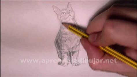 dessin au crayon de chat assis comment dessiner