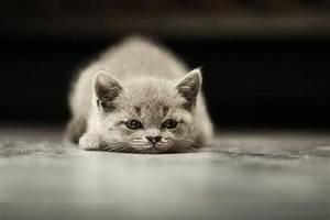 Comment Savoir Si Mon Ordinateur Est Surveillé : comment savoir si mon chat est triste 8 tapes ~ Medecine-chirurgie-esthetiques.com Avis de Voitures
