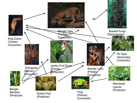 cuisine web tiger food chain pictures food