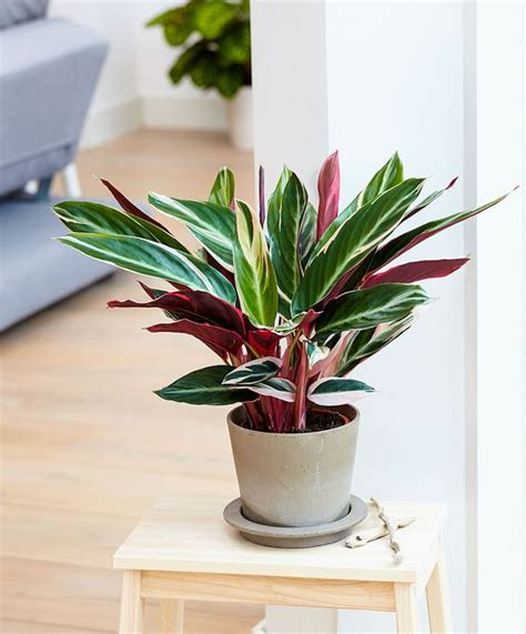 colorful indoor plants low light 10 houseplants that don t need sunlight leedy interiors