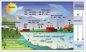 Simplified Diagram Of The Ecological Effects Caused By Nitrogen And