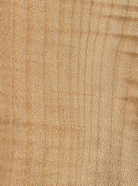 bigleaf maple  wood  lumber identification