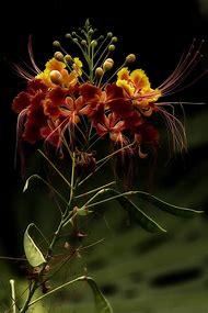 Amazing Nature Flowers