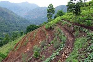 Contour Planting Slows Runoff And Reduces Erosion   Focus ...