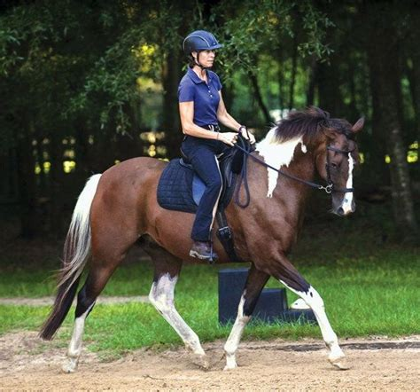 bridle bitless dressage horse debate horses bridles riding simple dressagetoday paint bit side training without pull natural gelding tack care