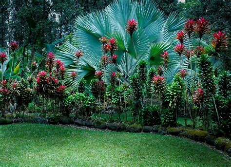 tropical flowering bushes tropical garden this one has quot ni quot the bright pink plant an edible tuber garden