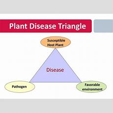 Ppt  Plant Diseases Powerpoint Presentation Id6192133