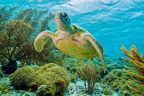 save  reefs   preserve  caribbeans underwater