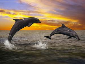 Dolphins at Sunset by AMDG-graphics on DeviantArt